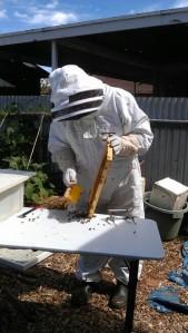 130317 Honey extraction